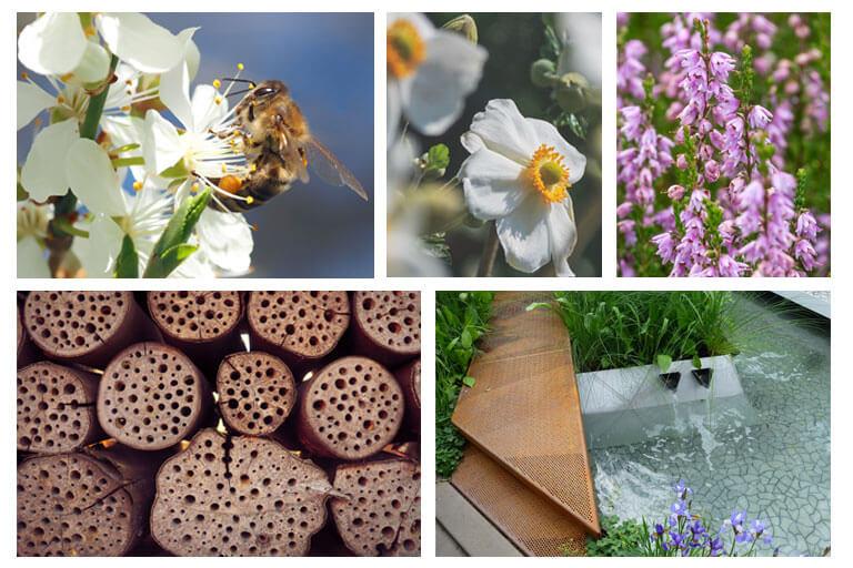 Bienen- und insektenfreundliche Gartengestaltung